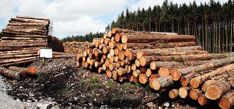 Heli-Logging in Denver, Colorado