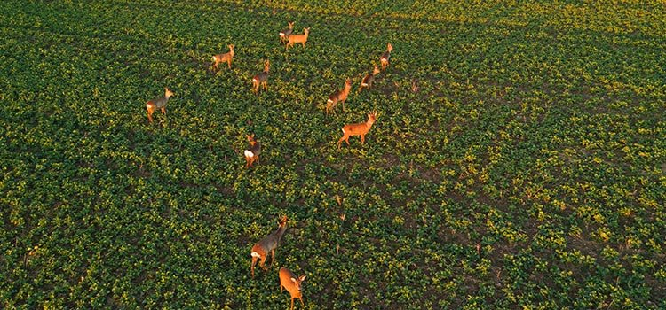 Decatur Helicopter Charters - Land and Wildlife Surveys in Decatur, Georgia