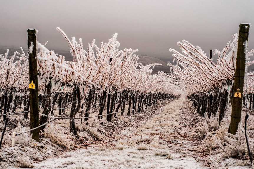 Flex Air Provides Vital Protection For Vineyards From Frost